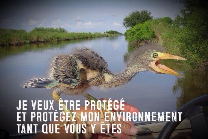 heron malheureux